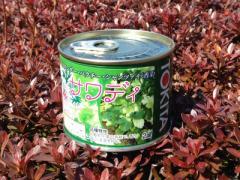 トキタ種苗 サワディパクチー 2デシリットル缶 【宅配便対応】