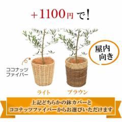 香川オリーブ6号専用バスケット ライトorブラウン ※オリーブの木は別売りです。こちらの商品は単品購入できません。
