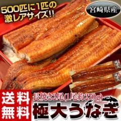 丑の日 父の日 うなぎ 宮崎県産 『極大うなぎ』2尾(1尾約270g) ※冷凍・送料無料
