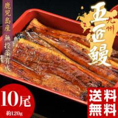丑の日 父の日 うなぎ 鹿児島産 うなぎ蒲焼「五匠鰻」 約120g×10尾 ※冷凍・送料無料