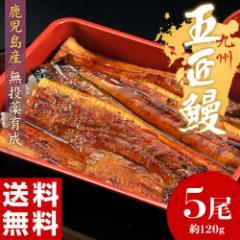 丑の日 父の日 うなぎ 鹿児島産 うなぎ蒲焼「五匠鰻」 約120g×5尾 ※冷凍・送料無料