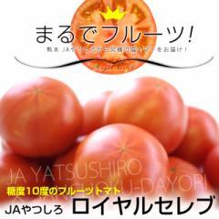 送料無料 熊本県から産地直送 JAやつしろ フルーツトマト ロイヤルセレブ MからSサイズ(11から16玉) 約1キロ