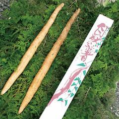 送料無料★笠間市 自然薯 (約800g)【のしOK】/御歳暮/グルメ 食品 ギフト