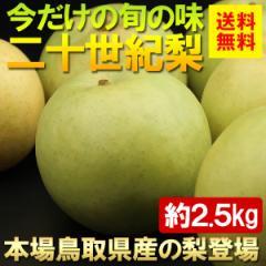 送料無料 フルーツ 梨 本場!鳥取県産 二十世紀梨 2.5kg ナシ なし(gn)