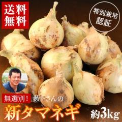 送料無料 産地直送 和歌山県産 藪下さんの特別栽培「新タマネギ」約3kg たまねぎ 玉ねぎ 玉葱