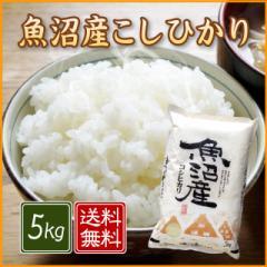 【送料無料】魚沼産コシヒカリ 5kg<5kg×1袋 白米 お米 ギフト 贈り物 新潟 28年 新米>
