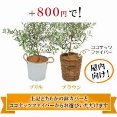 香川オリーブ かご 5号 選べる ブリキ ブラウン※こちらの商品は単品購入できません。