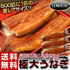丑の日 父の日 うなぎ 宮崎県産 『極大うなぎ』 3尾(1尾約270g) ※冷凍・送料無料