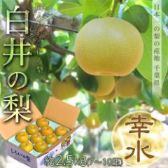 千葉県産 白井の梨「幸水」 1箱約2.5kg(7〜10玉) ※冷蔵 ☆