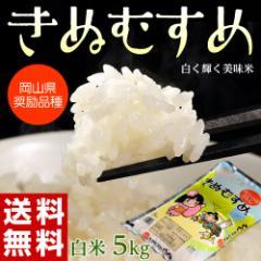 《送料無料》岡山県産米 「きぬむすめ」 白米 5kg 1袋 ※常温・産直 ○