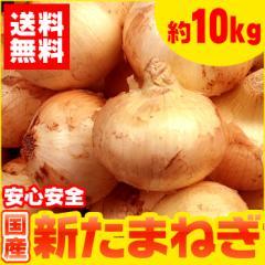 【送料無料】生活応援!国産 たまねぎ 約10kg【玉ねぎ】【タマネギ】(gn)