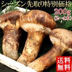 送料無料 マツタケ 松茸 まつたけ シーズン先取り特別価格 松茸 200g(gn)