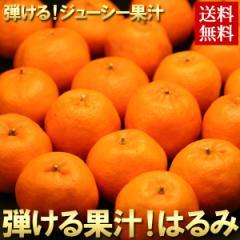みかん 訳あり 送料無料 はるみ 約2kg 農家自家用 ワケあり ミカン 希少品種 旬 フルーツ 果物(gn)