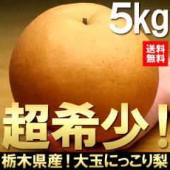 送料無料 フルーツ 梨 栃木県産 にっこり梨 約5kg  6〜8玉 ナシ なし(gn)