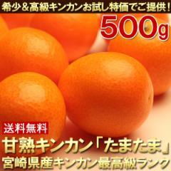 送料無料 とろける甘さのキンカン「たまたま」約500g きんかん 金柑(gn)