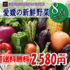 福袋愛媛のお楽しみ野菜セットお試し版8品 送料無料!!
