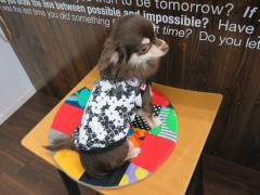 【送料無料】 黒白の花柄Tシャツ L 女の子用 ドッグウェアー 犬服 室内用 抜け毛防止 袖なし