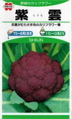 野崎採種場 紫カリフラワー 紫雲 1ml