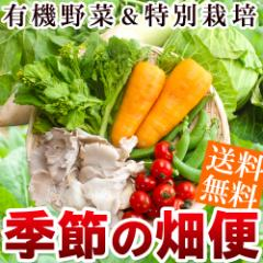 季節の畑便 野菜詰め合わせ 季節のおまかせ野菜セット 7品目 送料無料