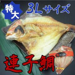 【特大・3Lサイズ】旬な魚を一夜干し!連子鯛(350〜450g)《※冷凍便》