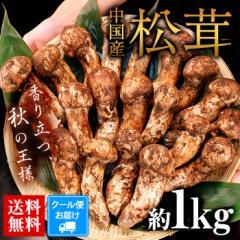 送料無料 中国産松茸 約1kg まつたけ マツタケ 輸入 どっさり まとめて