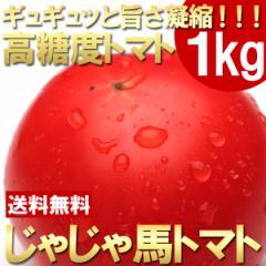 【送料無料】【トマト】【期間限定】高糖度トマト「じゃじゃ馬」約1kg【フルーツトマト】(gn)
