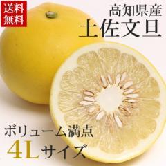 【送料無料】【文旦】土佐文旦約2.5kg【大玉】【高知】【柑橘】(gn)