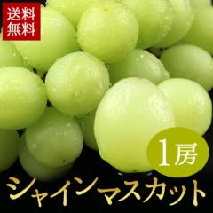 果物 ぶどう  ギフトランキング 送料無料 ハウス栽培 シャインマスカット1房 約400g ハウス マスカット(gc)