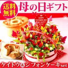 早割 母の日ギフト 送料無料 ケイトウ&ふわふわお芋シフォンケーキ 5号鉢 花とスイーツセット