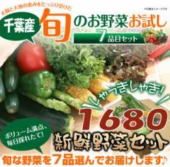 千葉県産 旬の採りたて新鮮野菜セット 7品目 お任せ 1680円「同梱配送不可】