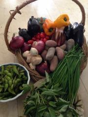 自然農園MITUの野菜セット(M)