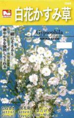 白花かすみ草 【春】【秋】 【郵送対応】