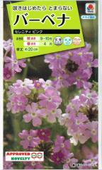タキイ種苗 バーベナ セレニティピンク 0.5ml