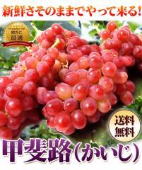 赤葡萄の女王甲斐路1kg(3〜4房)/フルーツ/かいじ/ぶどう/ブドウ/送料無料/ギフト/贈答/プレゼント
