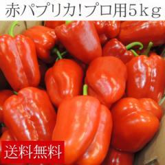 【市場直送】赤パプリカ原箱5kg【パプリカ】(gn)