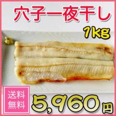 アナゴの一夜干し/1kg/干物/お取り寄せ/焼き魚/おつまみ/肴/お歳暮/ギフト/父の日/