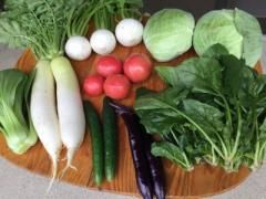 <送料無料>産地直送!島根県出雲産の「ひかわ美人野菜」旬の彩り野菜詰合せ5〜7品おまかせ「小セット」