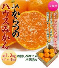 佐賀県産 JAからつのハウスみかん Mサイズ 約1.2kg(11〜15玉)※常温○