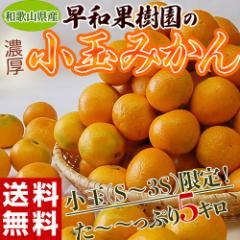 《送料無料》和歌山県産 早和果樹園の小玉みかん S〜3S 約5kg  ☆