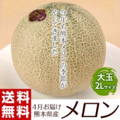 メロン 熊本県産「メロン」大玉2玉 約1.8kg(900g...