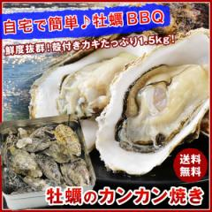 【送料無料】牡蠣のカンカン焼き 殻付きマガキたっぷり1.5kg!《※冷凍便》BBQ/バーベキュー
