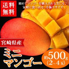 送料無料 マンゴー 宮崎県産 ミニマンゴー 約500g フルーツ 旬 果物 国産 芒果(gn)