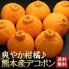 送料無料 フルーツ 爽やかブランド柑橘 熊本県産 デコポン 8〜12玉 ギフト お歳暮(gn)