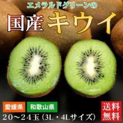 送料無料 フルーツ 愛媛県 和歌山県 国産キウイフルーツ 20〜24玉(3L・4L)(gn)