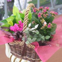 寄せ鉢プリティーミックス 誕生日 お祝のお花 プレゼント 送別会 退職祝い花ギフト 花宅配エーデルワイス花の贈り物