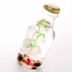 【北海道土産】まりも 瓶形