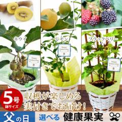 父の日 ギフト 選べる3種類の果樹5号鉢 キウイ ブラックベリー レモン(実付き)の鉢植え〜バスケット付き!