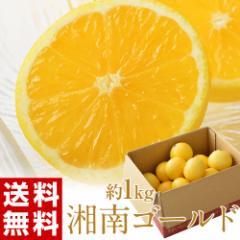 柑橘 神奈川・小田原産『湘南ゴールド』 約1kg 無選別 ※常温・送料無料 ☆