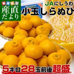 送料無料 愛媛県より産地直送 JAにしうわ しらぬひ 小玉 Mサイズ 5キロ(28玉前後)不知火 しらぬい