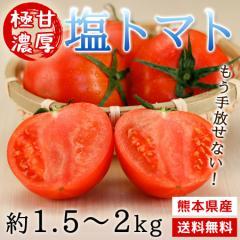 トマト 熊本県産 極甘濃厚 塩トマト 約1.5〜2kg 糖度8度以上 送料無料 旬 フルーツ 野菜